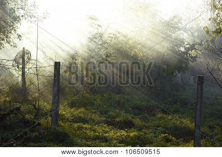 the sun's rays penetrate