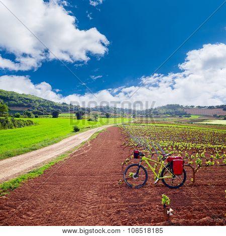 La Rioja vineyard fields biking in The Way of Saint James with bike