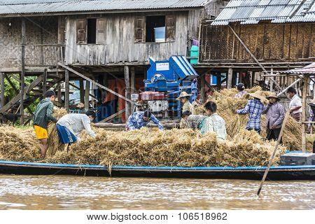 People At Inle Lake Thresh The Corn