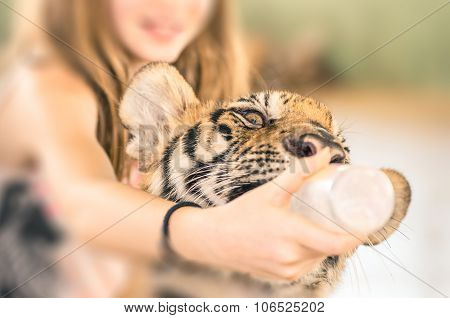 Young Girl Feeding A Baby Tiger With Plastic Bottle At The Zoo