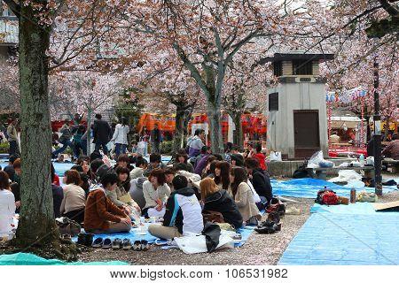 Kyoto Hanami Party