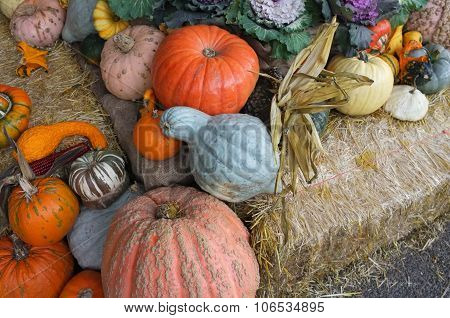 Winter Squash Pumpkin Cabbage