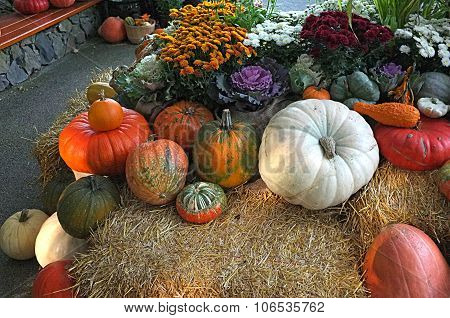 Winter Squash Pumpkin  Flower Pots