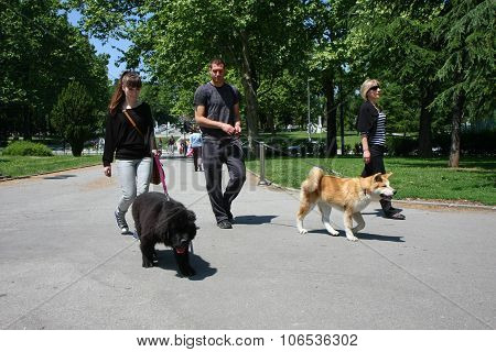 Walking With Puppies