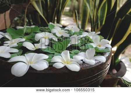 White Plumeria and Pistia Water Garden Pot