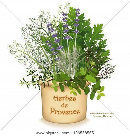 Herbes De Provence Garden Planter
