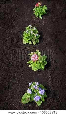 Flowers o the black ground