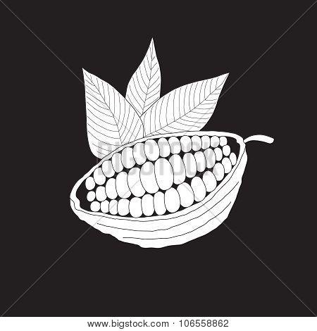 The cacao pod