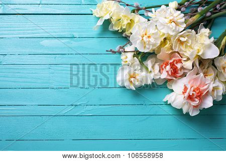 Fresh  Spring Yellow  Daffodils Or Narcissus And Willow Flowers