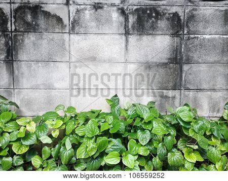 Brick wall background with natural bush