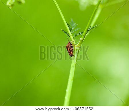 Climbing Bug