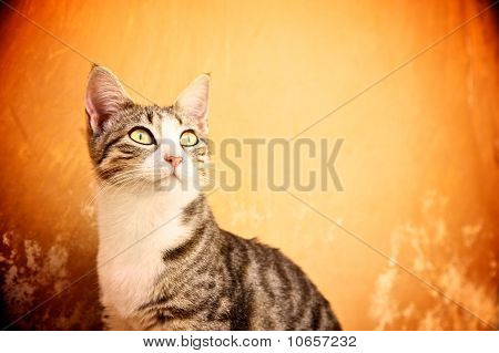 Cat against abstract background