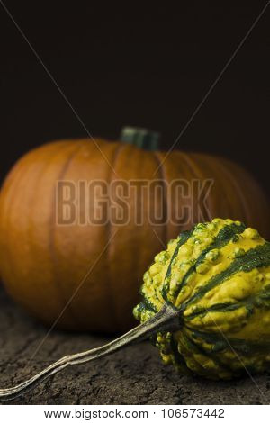 Thanksgiving pumpkins on a cork bark