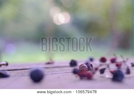 Two Withered Grape Berries Artistic Selective Soft Focus Background