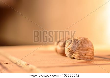 Artistic Vintage Snail Or Gastropod Shell Selective Focus