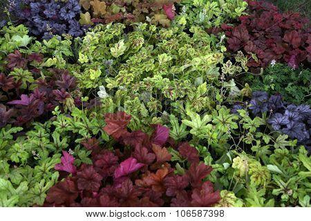 ZAGREB, CROATIA - MAY 30: Flowers exposed on Floraart, 49 international garden exhibition in Zagreb, Croatia, on May 30, 2014.