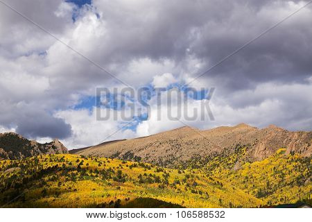 Brilliant Aspens In Pike National Forest Near Pike's Peak In Colorado