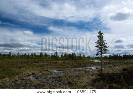 Wide Land In Finland