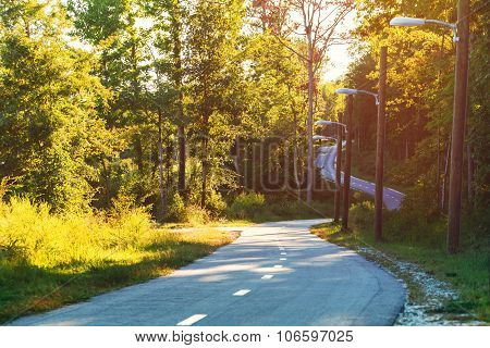 Winding Forest Path At Sunset