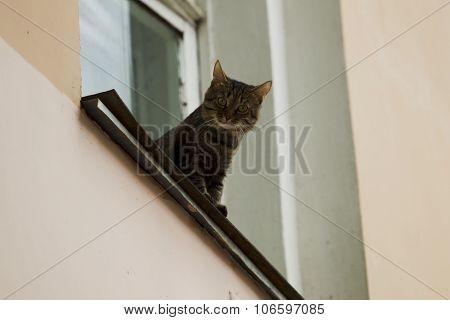 A Cat Sitting On The Windowsill.