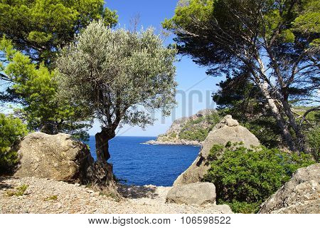 Picturesque sea landscape with bay. Mallorca, Spain