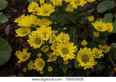 Yellow Flower on ground