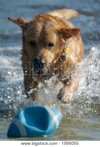 Dog Playing 1