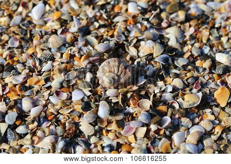 Fragments Of Marine Shells