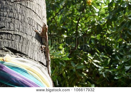 Chameleon Catch On A Tree