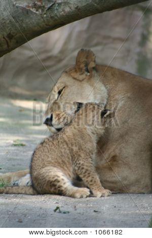 Lions 48