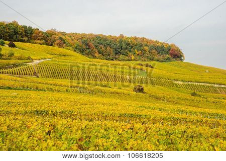 Champagne Wine Fields During Autumn
