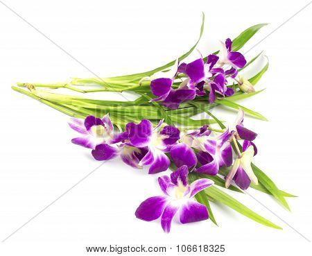 Purple Orchid And Pandanus Leaf On White Background