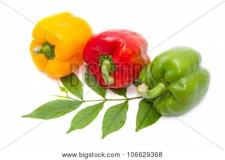 Fresh Green, Red And Yellow Paprika Isolated On White