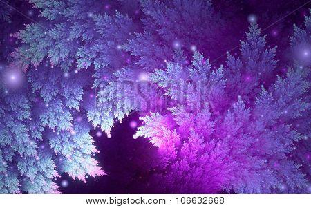 Blue-purple Juniper Branches