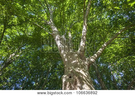 Tree Large Summer