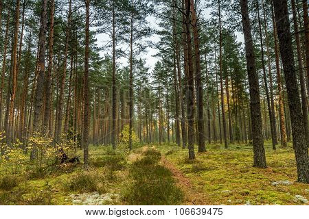 Green Moss In Forest