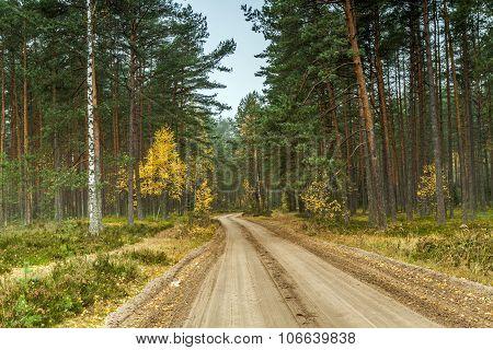 Gravel Path Through The Woods