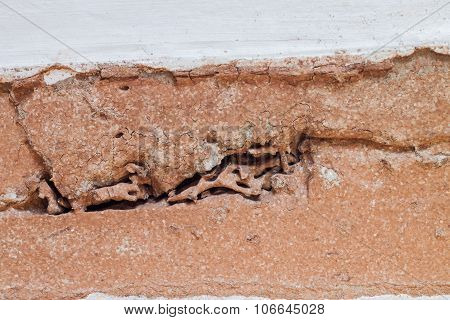 Trace Of Wood Damaged By Termite
