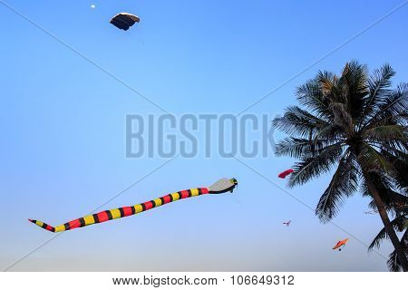 Colorful Kites Of Different Shape In Sky Against Large Palm