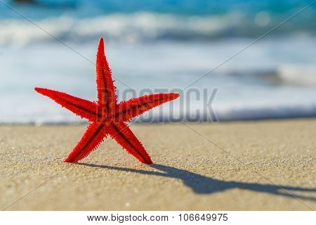 Starfish on the beach in the summertime