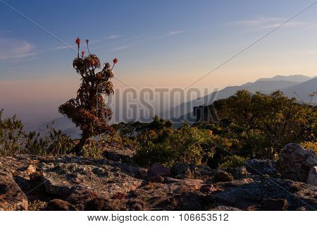 Aloe On High Mountain Rocks Landscape At Sunset With Clear Skies