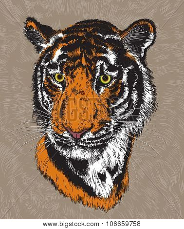 Illustration Of A Tiger's Face