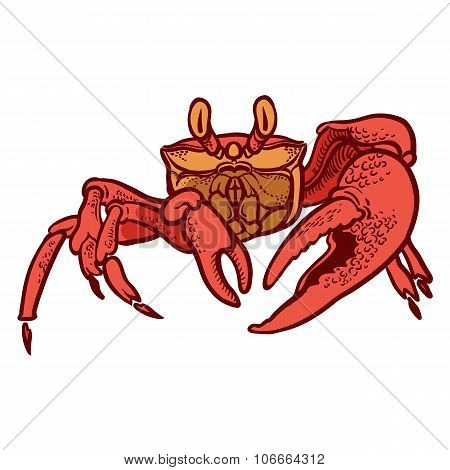 Detailed Hand Drawing Crab. Vector