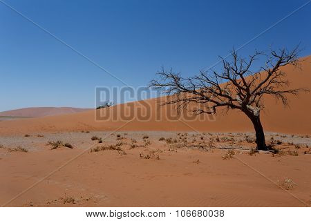 Dune 45 In Sossusvlei Namibia With Dead Tree