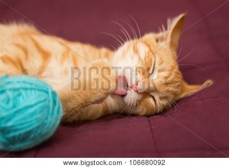 Little Red Kitten Licking Paw On The Bed