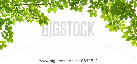 Green Leaves Border