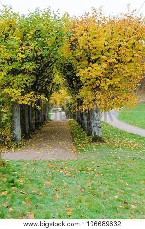 Autumn Tree In Garden