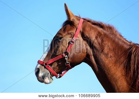 Beautiful Young Horse Posing Against Blue Sky