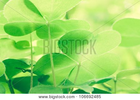 Green Beauty In  Forest