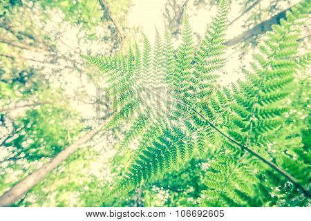 Ferns And Trees